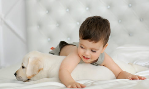 赤ちゃんとペット